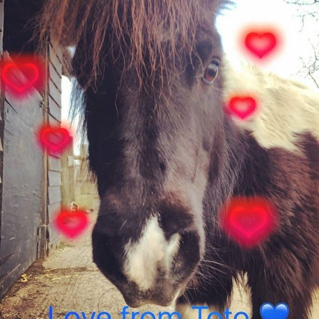 Happy Valentines Day from all the animals on the farmhellip