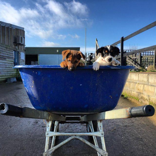 Need a lift? welliesoncic jackrussell borderterrier norfolkterrier terrier carefarming sunnyhellip