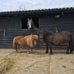 Three of our horses that are used for equine therapy