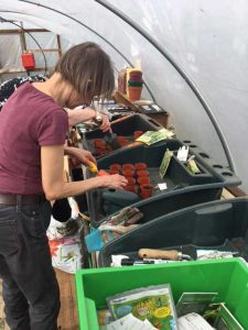 in the polytunnel
