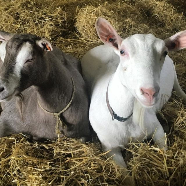 Fresh bedding and chilling with your best friend welliesoncic carefarminghellip