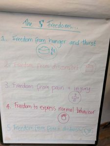 the five freedoms of animals